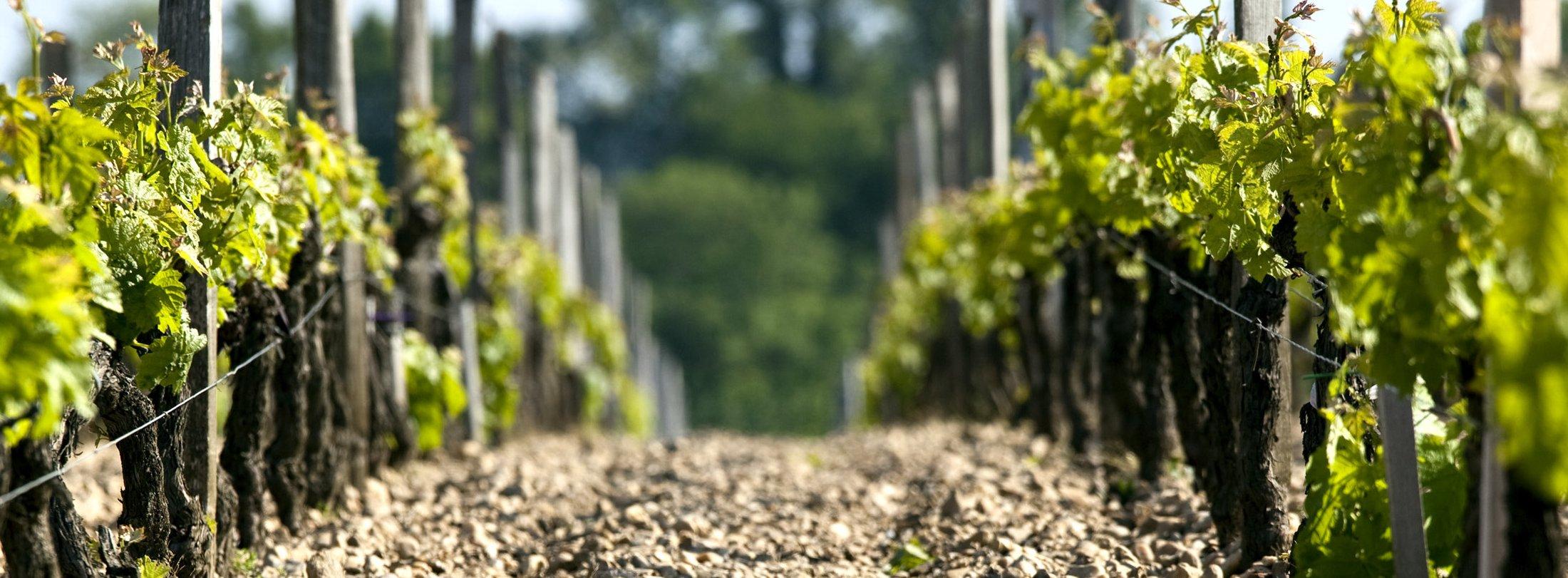 Beau domaine viticole en AOC Bordeaux Graves Sauternes Pomerol Saint Emilion