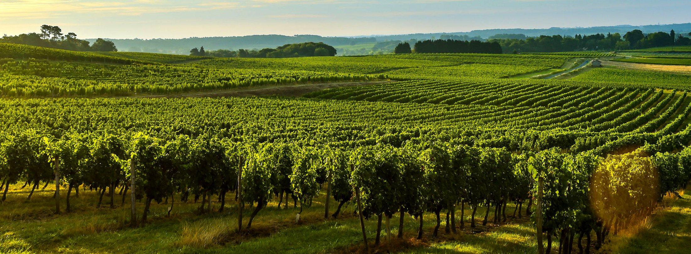 Investissement chateau viticole Bordeaux Aquitaine Gironde France